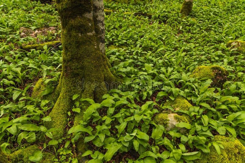 Boomstam van een boom in het groene gras stock foto