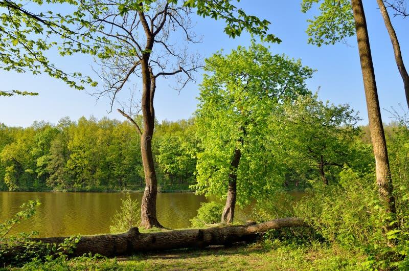 Boomstam van een gevallen boom in een bosmeerwater royalty-vrije stock afbeeldingen