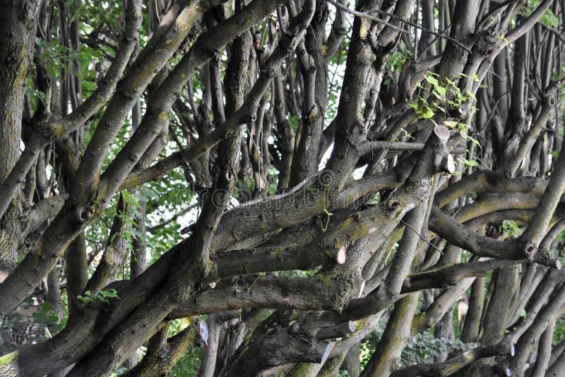 Boomstammen en takken van bomen royalty-vrije stock afbeeldingen