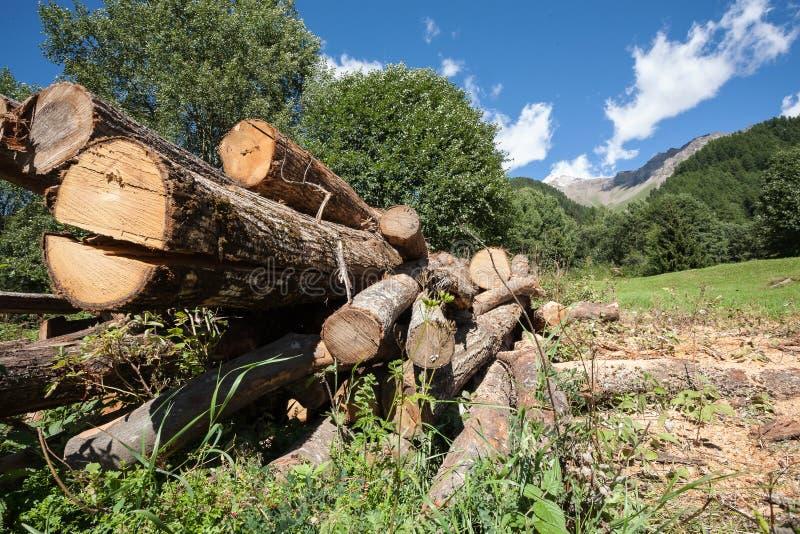 Boomstammen van bomen in de bergen stock foto's