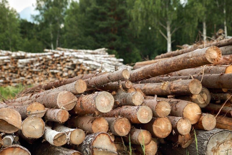Boomstammen van bomen in de voorgrond worden en worden gestapeld gesneden die royalty-vrije stock afbeelding