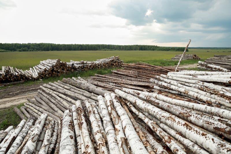 Boomstammen van bomen in de voorgrond worden en worden gestapeld gesneden die royalty-vrije stock foto's