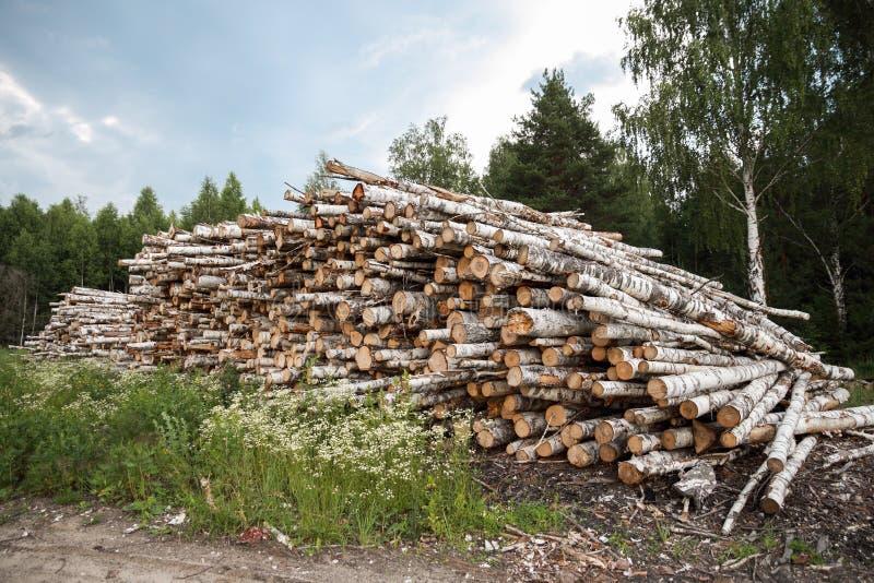 Boomstammen van bomen in de voorgrond worden en worden gestapeld gesneden die royalty-vrije stock afbeeldingen