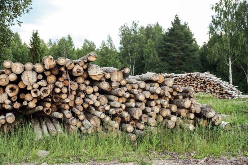 Boomstammen van bomen in de voorgrond worden en worden gestapeld gesneden die stock afbeelding