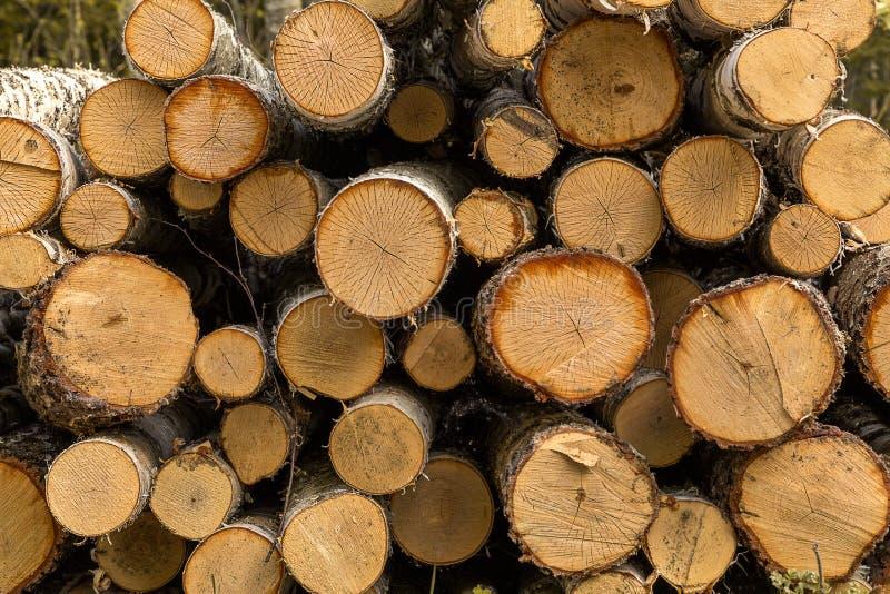 Boomstammen van bomen gestapeld close-up royalty-vrije stock foto