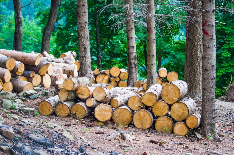 Boomstammen van bomen in het bos worden gesneden dat stock afbeeldingen