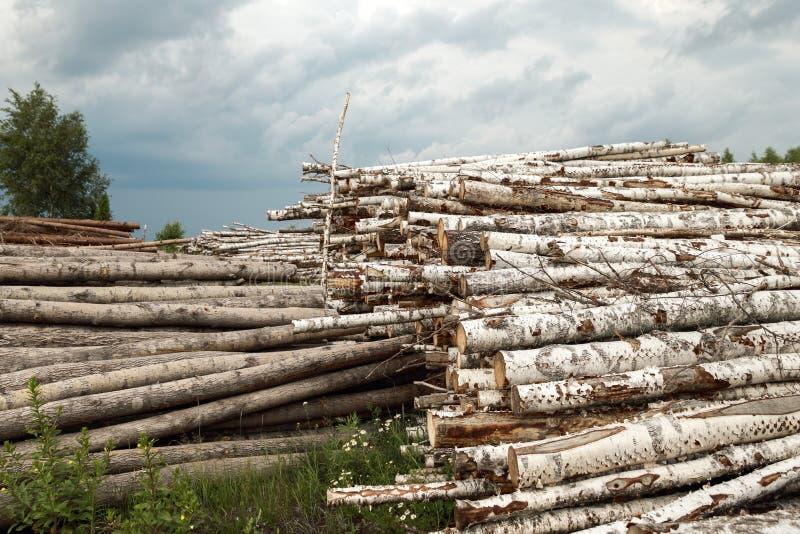 Boomstammen van bomenbesnoeiing royalty-vrije stock fotografie