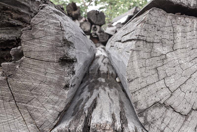 Boomstammen van bomenbesnoeiing en gestapeld royalty-vrije stock foto's