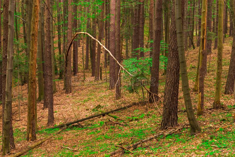 Boomstammen van lange bomen royalty-vrije stock foto's