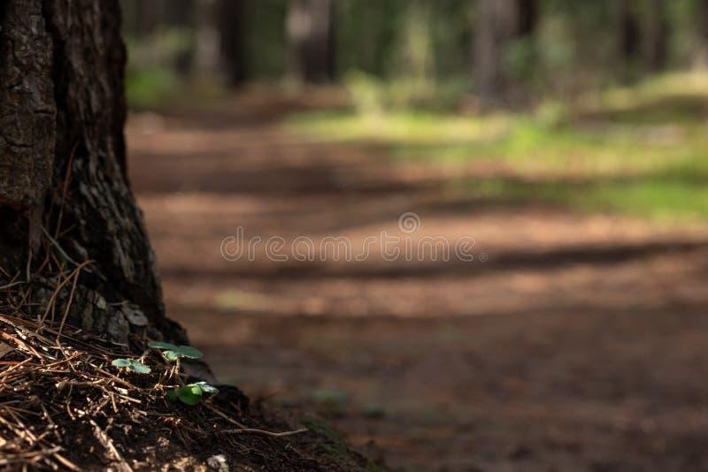 Boomstomp met onscherp voetpad op achtergrond stock afbeeldingen