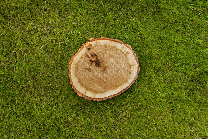 Boomstomp op het gras, hoogste mening royalty-vrije stock foto