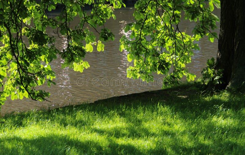 Boomtak en bladeren met trillende groene kleuren in het zonlicht royalty-vrije stock foto's