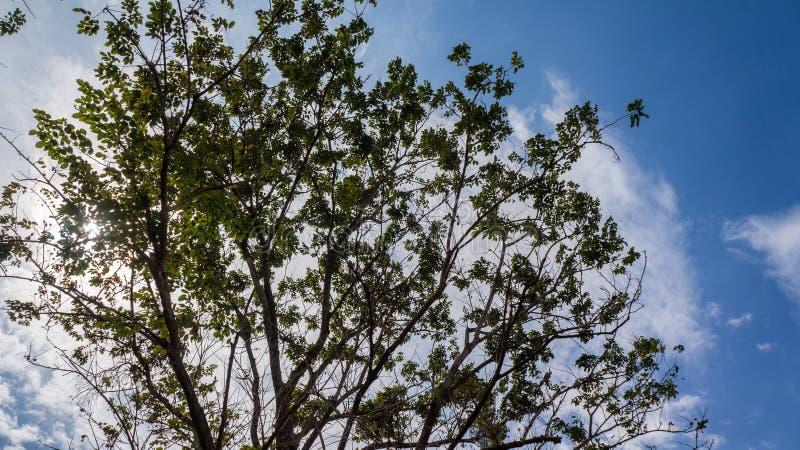Boomtak met blauwe hemel en wolk royalty-vrije stock fotografie