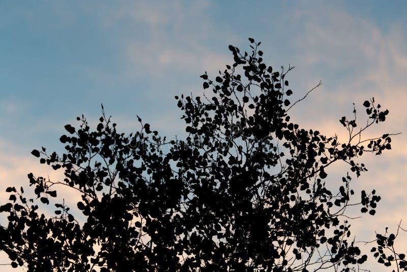 Boomtak op een achtergrond van dageraad stock foto