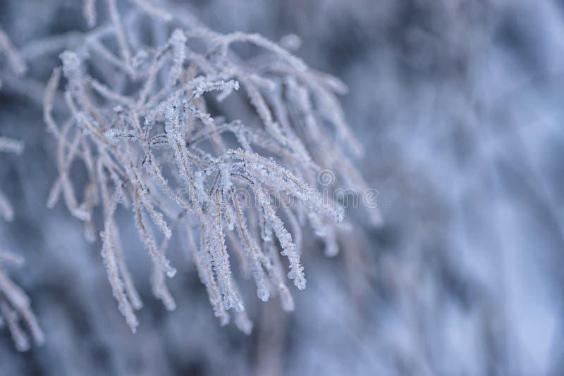 Boomtakken die met bevroren sneeuw worden behandeld, de winter royalty-vrije stock foto's
