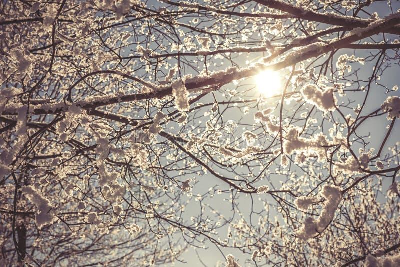 Boomtakken die met bevroren sneeuw worden behandeld, de winter royalty-vrije stock afbeelding