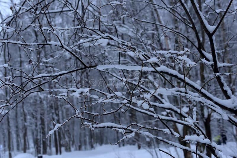 Boomtakken en heel wat sneeuw stock afbeeldingen