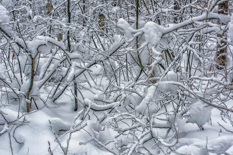 Boomtakken en heel wat sneeuw royalty-vrije stock afbeeldingen