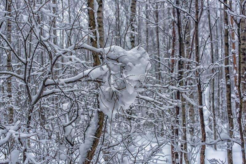 Boomtakken en heel wat sneeuw stock foto's