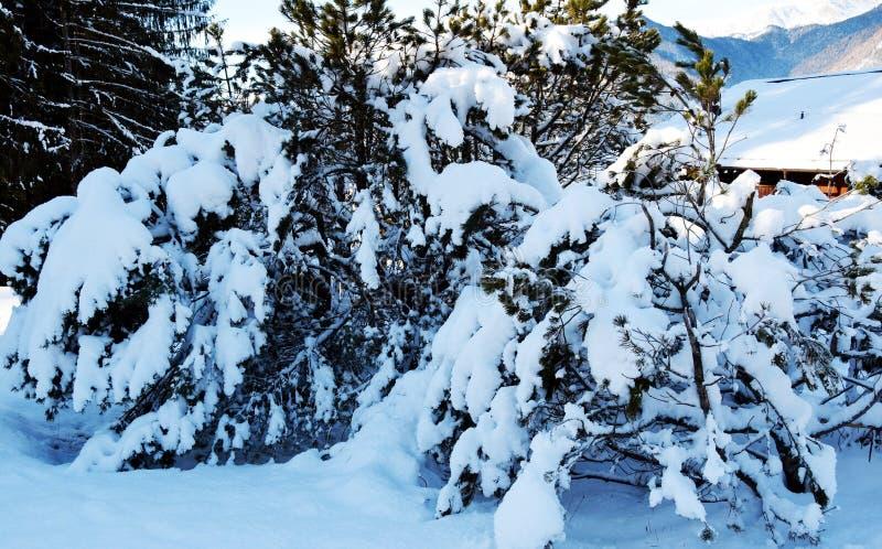Boomtakken en sneeuw, natuurlijke achtergrond in bruine tinten royalty-vrije stock afbeeldingen