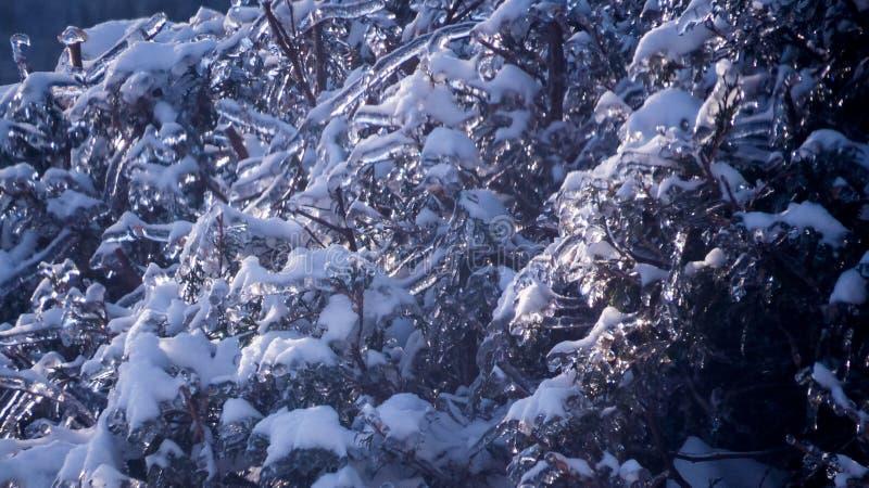 Boomtakken met ijs en sneeuw worden behandeld die royalty-vrije stock fotografie