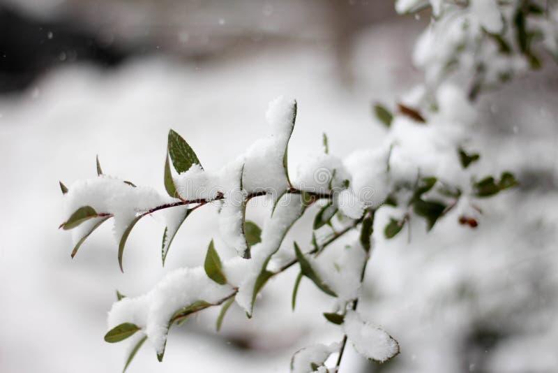 Boomtakken in sneeuw worden overspoeld die royalty-vrije stock afbeeldingen