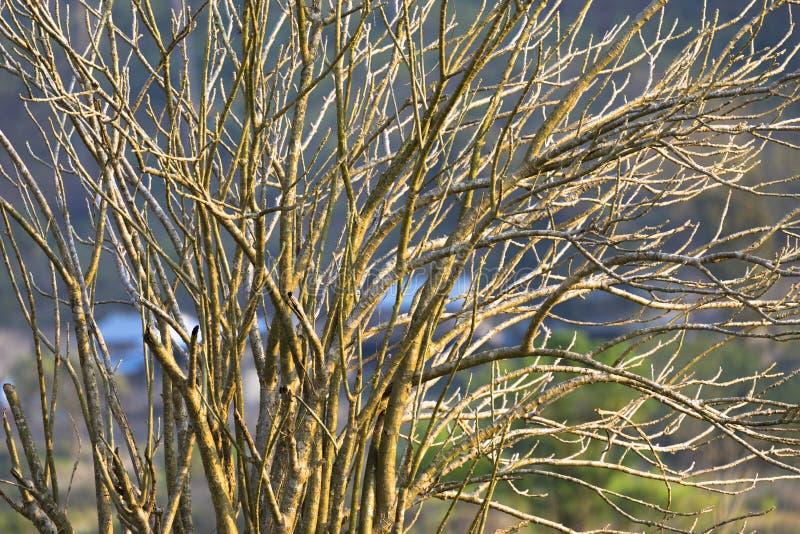 Boomtakken zonder Bladeren stock afbeelding