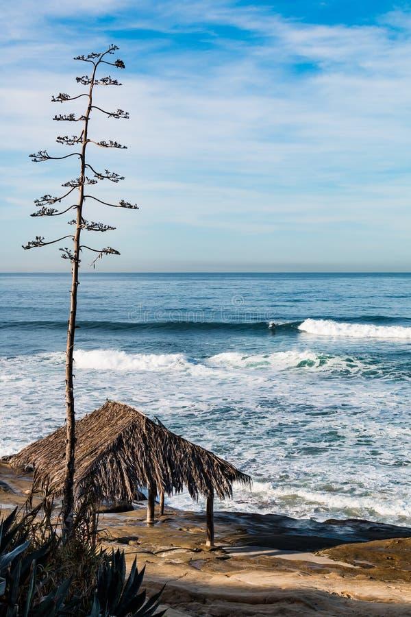 Boomtorens over Iconische Surferkeet bij Windansea-Strand stock foto's