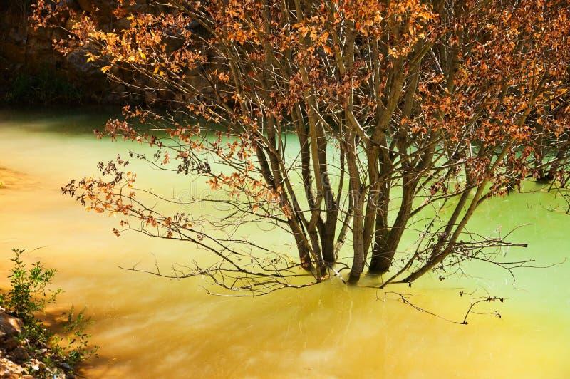 Boomtribunes in water stock fotografie