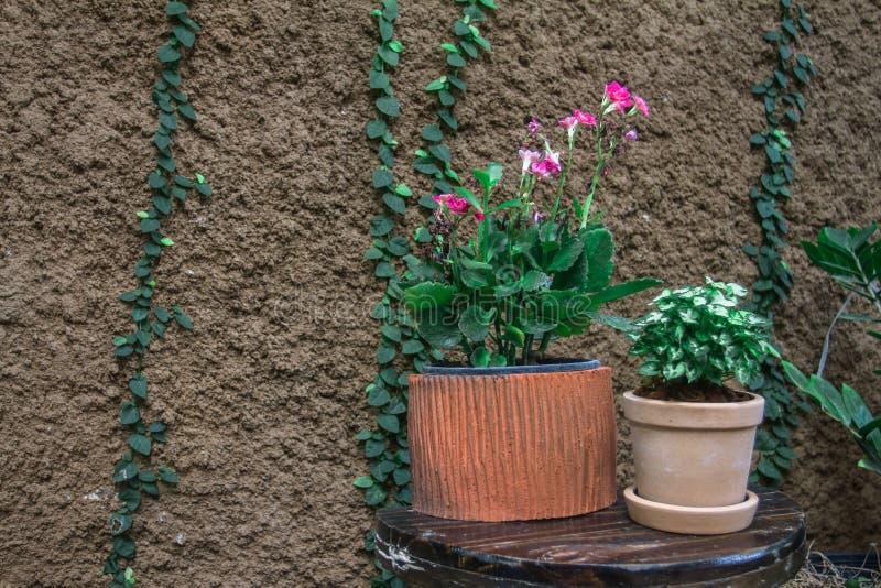 Boomtypes in binnenpot Geplaatst op de lijst in de tuin van de koffiewinkel stock afbeeldingen
