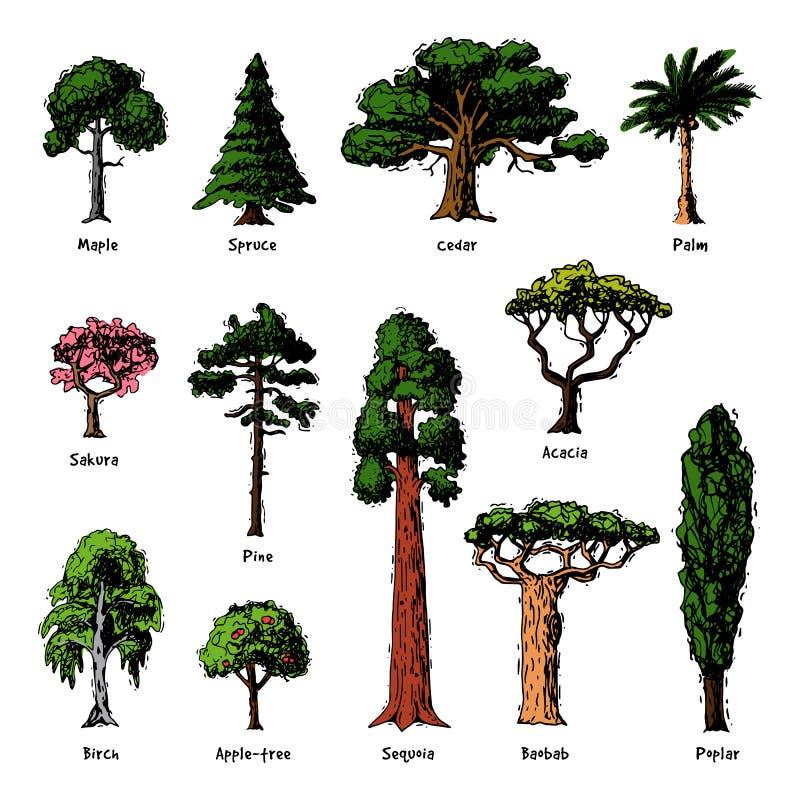 Boomtypes tuinieren de vector groene bospijnboomtreetops inzameling van berk, de ceder en de acacia of het realistische groen met vector illustratie