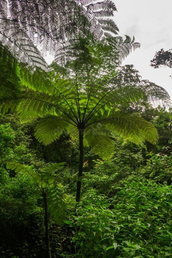 Boomvaren in regenwoud stock foto's
