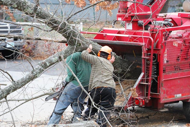 Boomverwijdering en boomstam van de arbeiders de bewegende boom aan malende machine stock afbeeldingen