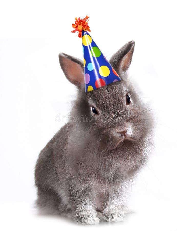 verjaardag vrouw konijn