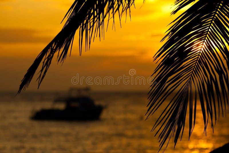 Boot bei Sonnenaufgang gestaltet durch Kokosnussniederlassungen stockfoto
