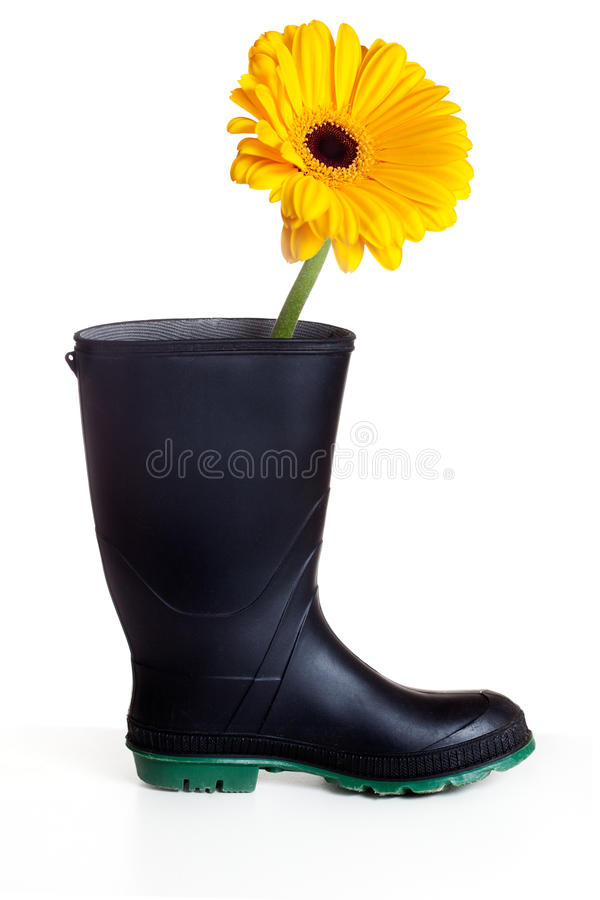 Download Boot with daisy stock image. Image of plants, gerbera - 25232739
