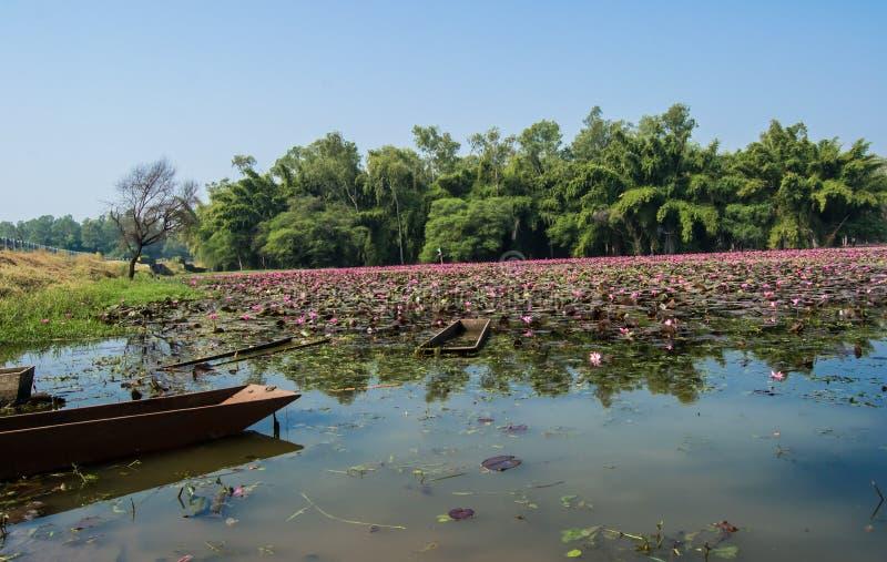 Boot in een Meerwater Lilly Trees en Landschap royalty-vrije stock foto