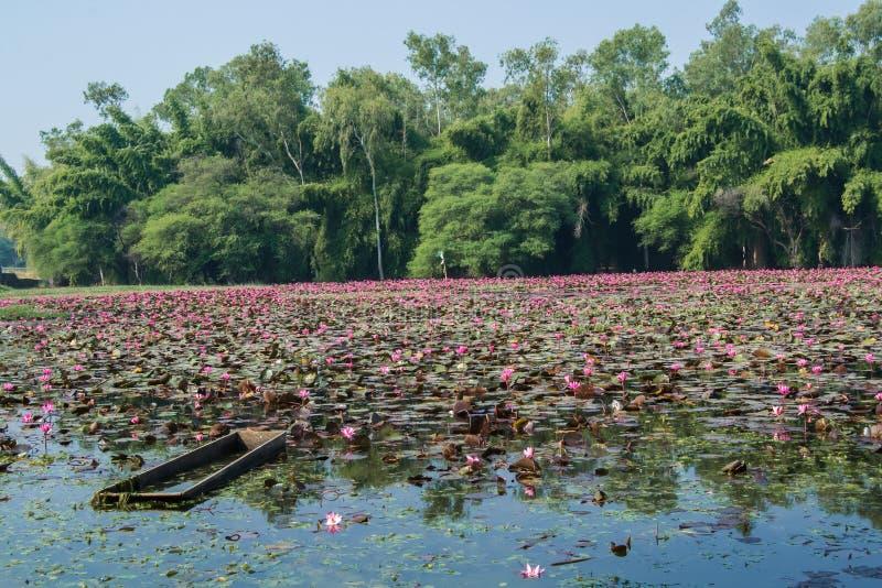 Boot in een Meerwater Lilly Trees en Landschap stock afbeelding