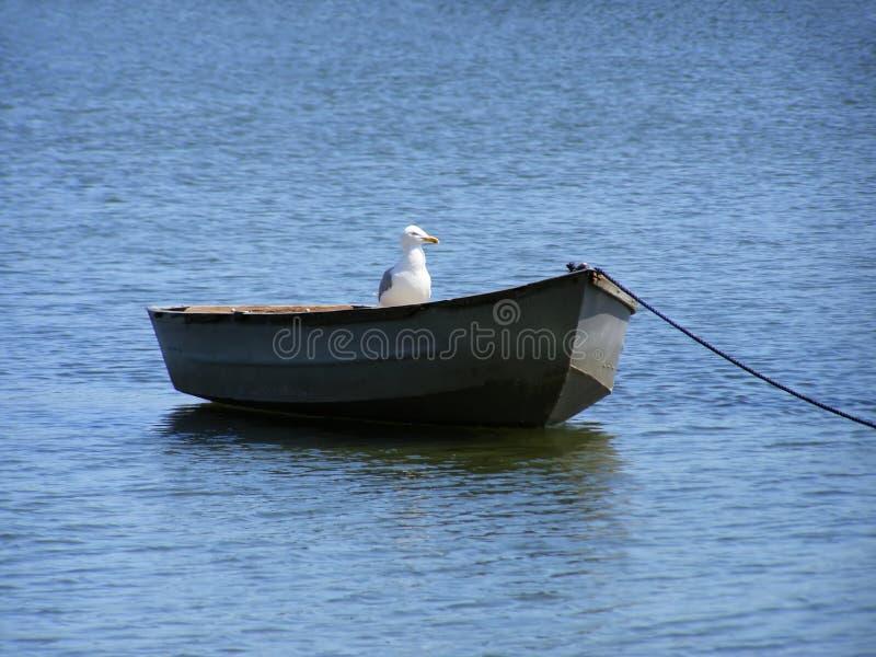 Boot met vogel royalty-vrije stock afbeelding