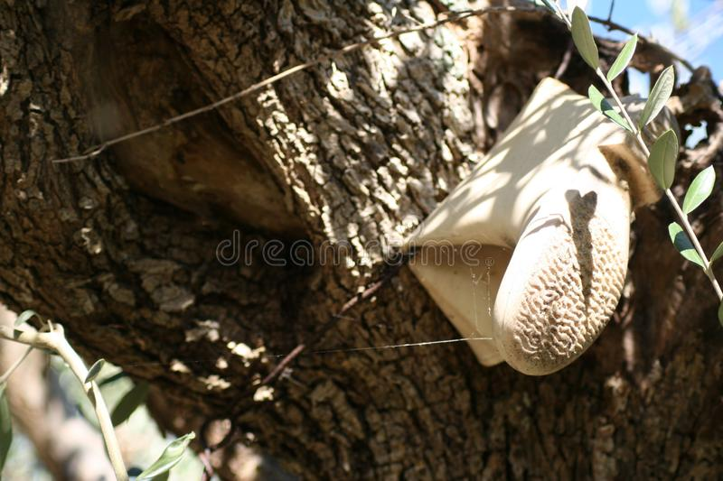The boot in the tree stock photography