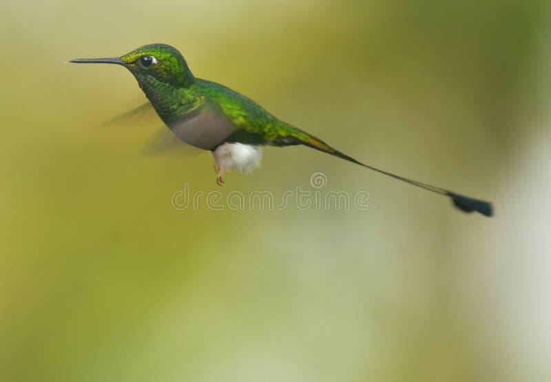 booted кабель ракетки hummingbird стоковые изображения rf