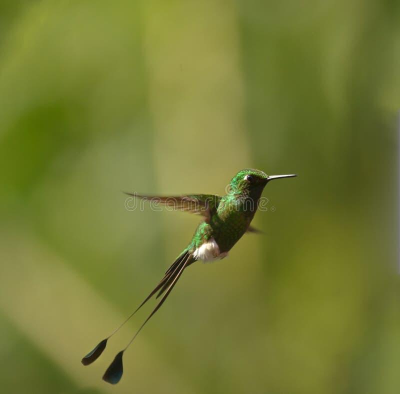 booted кабель ракетки hummingbird стоковое изображение