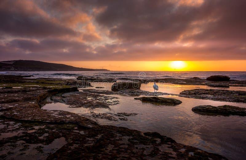 Boothaven Australië met Pelikaan royalty-vrije stock foto