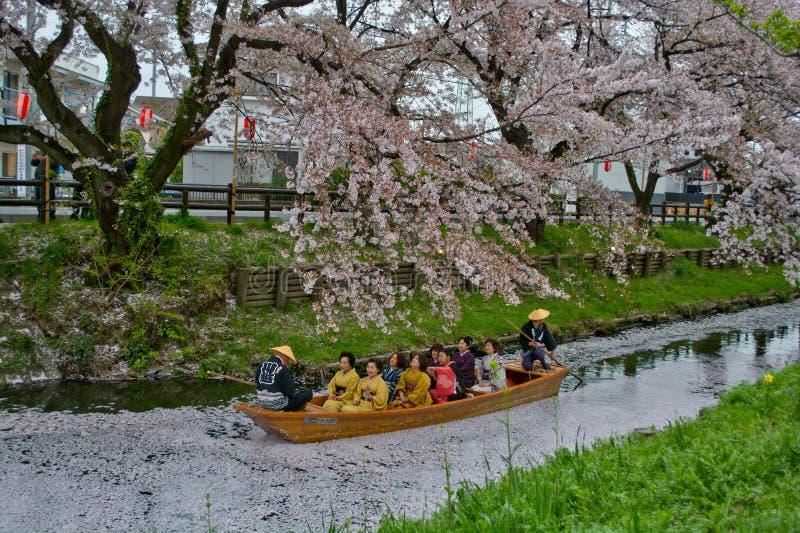 Bootrit onder Sakura stock fotografie