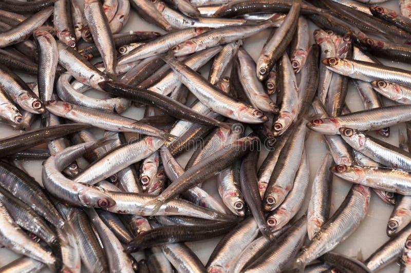 Boquerones, anchois photos stock