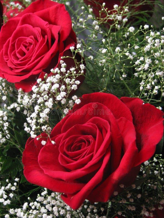 boquet玫瑰 免版税库存照片