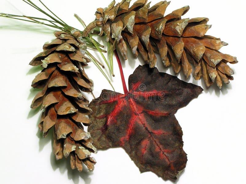 Boquet di autunno fotografia stock