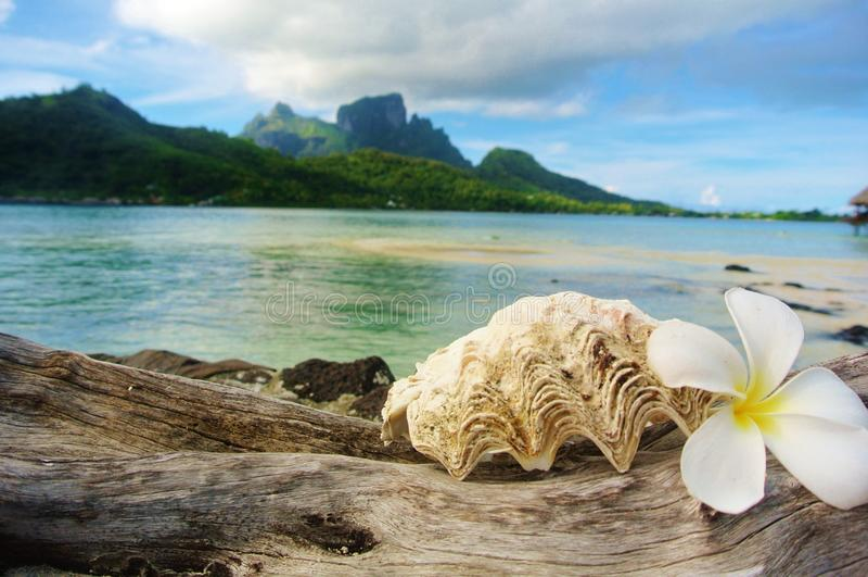 Bora Bora, θαλασσινό κοχύλι και λουλούδι με το υπόβαθρο βουνών στοκ φωτογραφία