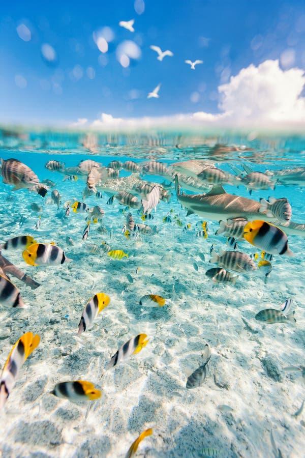 Bora Bora υποβρύχιο στοκ εικόνες με δικαίωμα ελεύθερης χρήσης