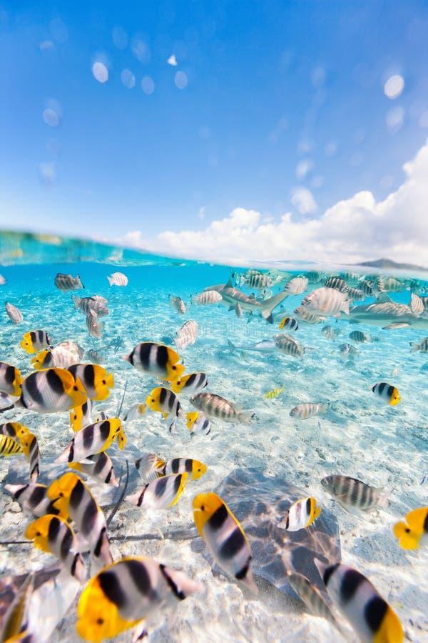 Bora Bora υποβρύχιο στοκ εικόνες